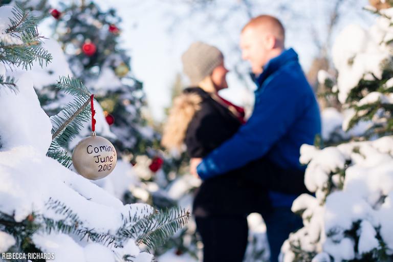 Maine Christmas Tree Farm
